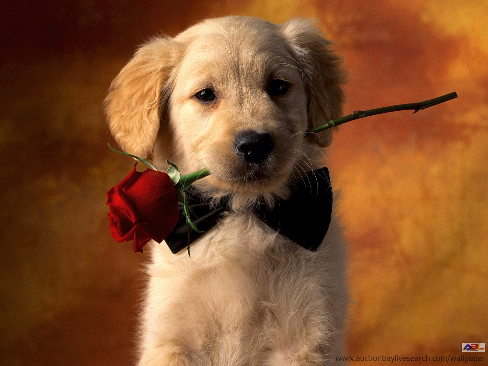 Valentine s day cait strides - Valentines day pictures with puppies ...